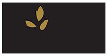 BIO OLIVES - Βιολογικές ελιές